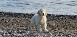 Disfrutando en la playa Bela