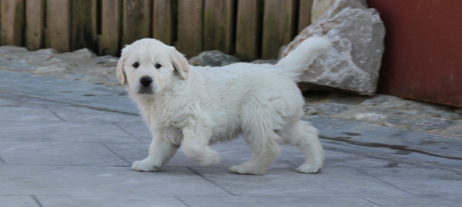 Fotos Cachorros