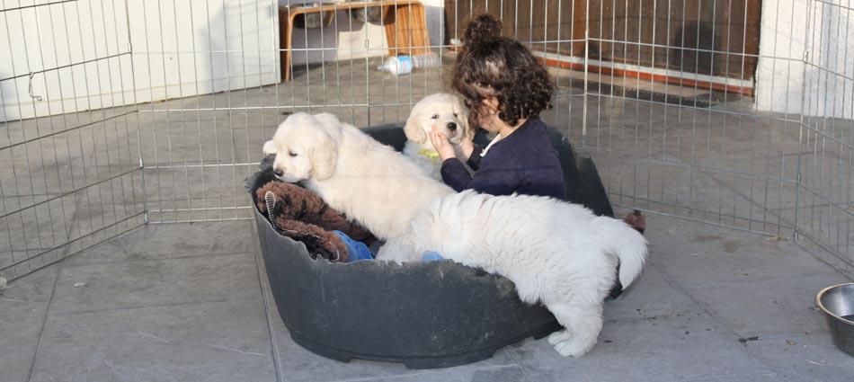 Cachorros con Gabriela